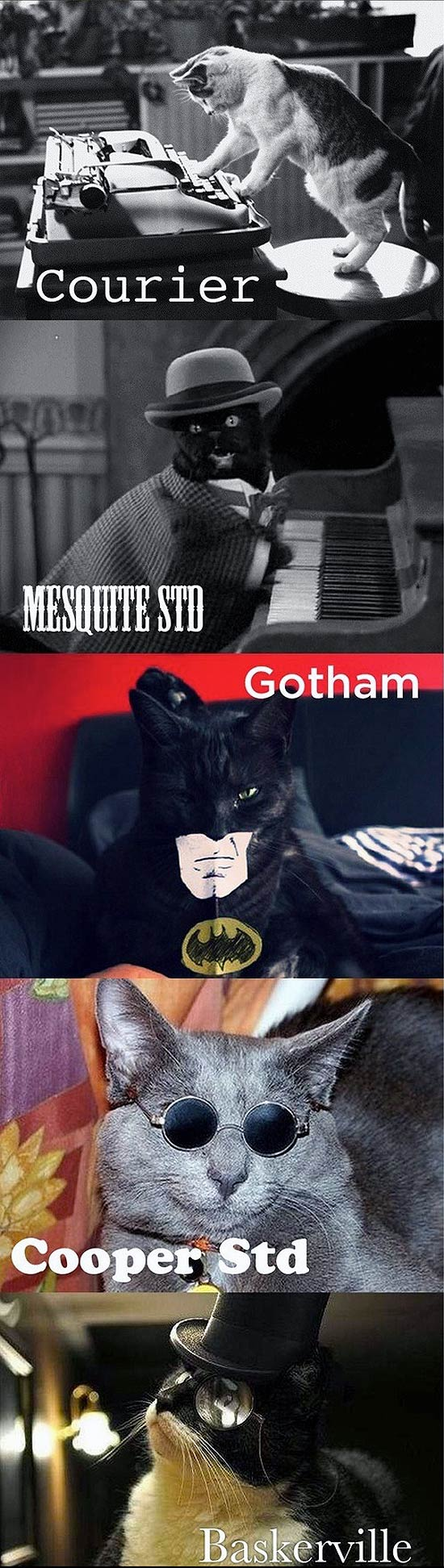 Chats et typographies : Courier, Gotham, Cooper, ...