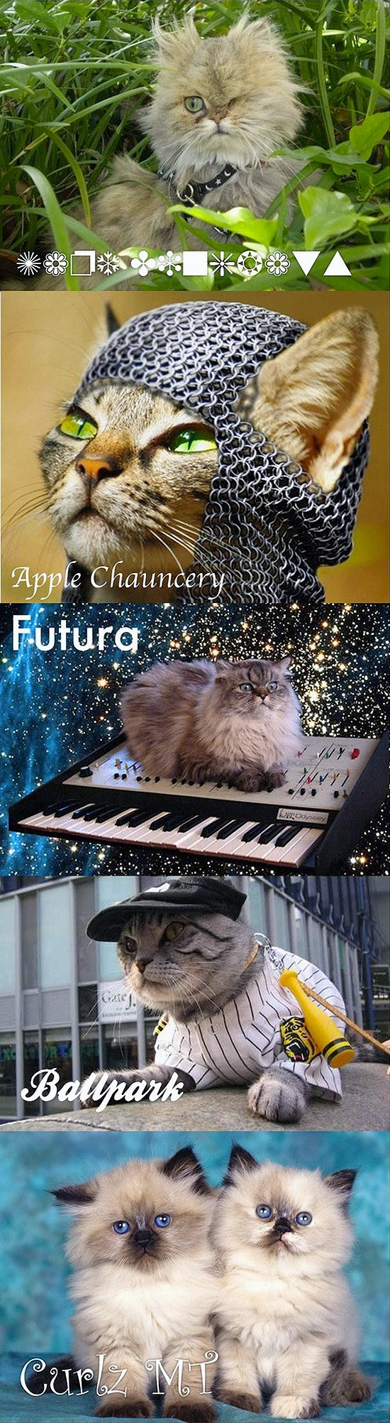 Les chats & les typos : Dings, Futura, Apple
